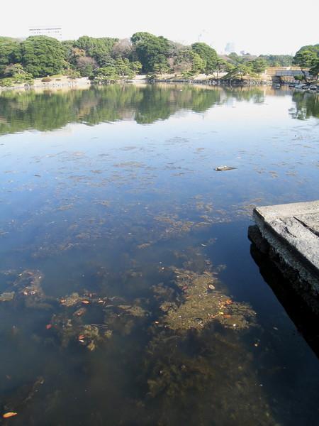 仔細看才發現池子似乎已經優氧化,肉眼所見沒有魚蝦或烏龜出沒