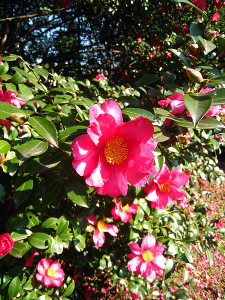 看了漂亮的花心情真好。春夏再來濱離宮賞花吧!