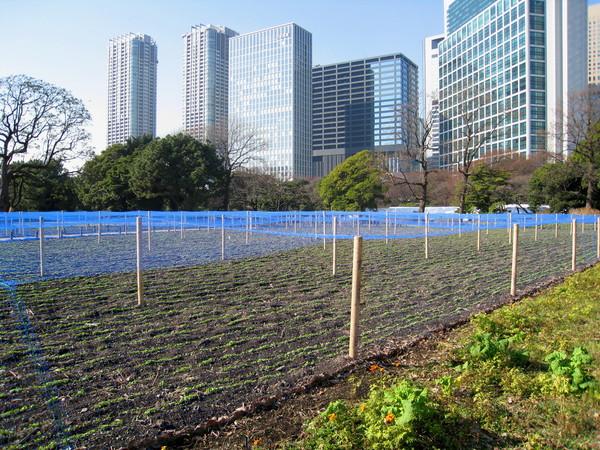 一大片用藍網圍起來的苗圃