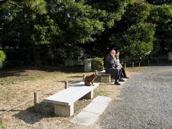 巧遇正在休息的老夫妻和曬太陽的小花貓