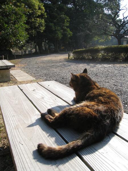 這隻野貓打破我對貓咪的壞印象,突然有衝動想養一隻