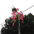 白金商店街的路燈上都掛了新年的花飾