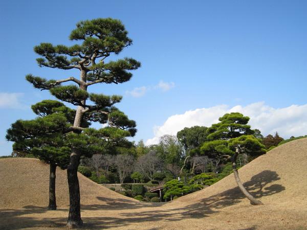 可惜冬景蕭瑟,日式庭園較適合春夏綠草如茵或秋季紅葉扶疏時來賞玩