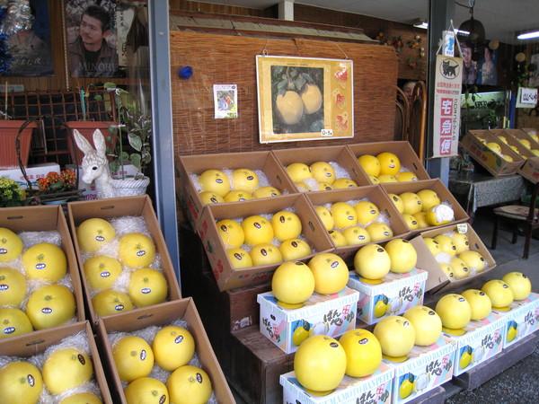 超大顆的是「白柚」,比台灣的柚子大很多
