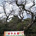 老樹下是熊本稻荷神社的宣傳看板