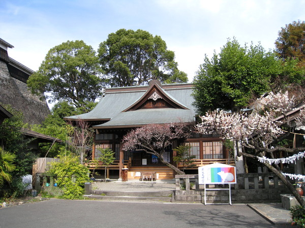 古樸建築前,早熟的櫻花已悄悄綻放
