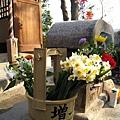 信徒供奉西向觀世音菩薩的鮮花