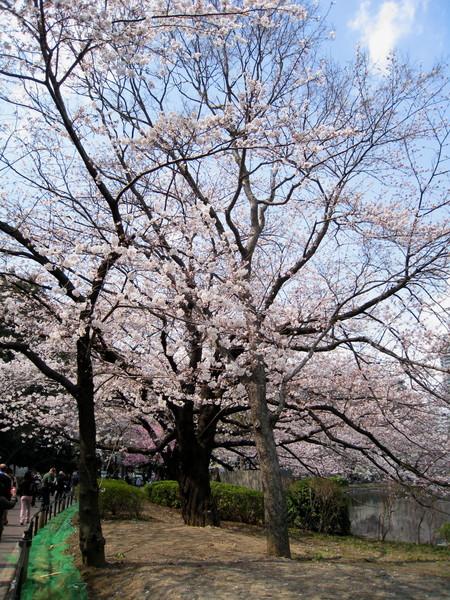 告別湯島天神,從側門散步進入上野公園