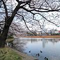 上野公園內的大湖名叫「不忍池」