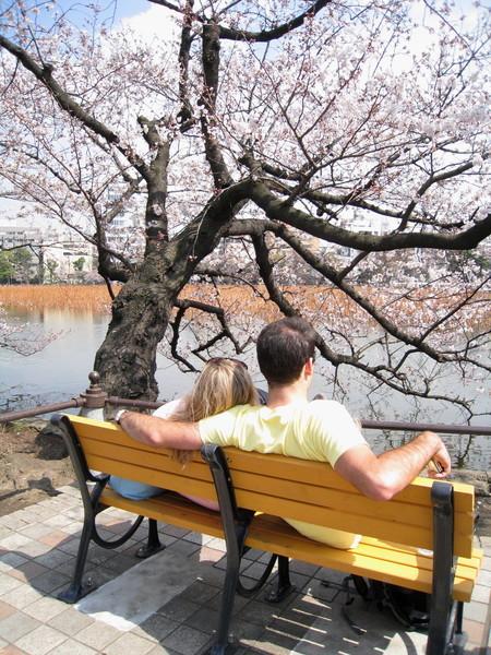 櫻花樹下的閃光彈