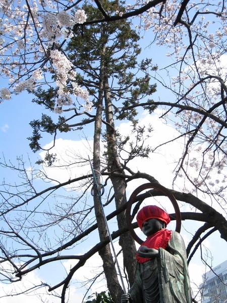 地藏王菩薩和櫻花樹