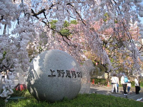 結束今日的上野公園賞花行程,肚子很餓