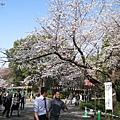 雖然是工作時間,上野公園裡仍充滿著西裝的上班族