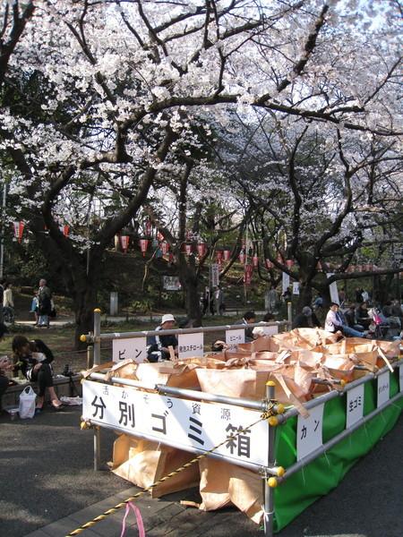 日本人對垃圾分類回收十分執著,連賞花大會也不放過