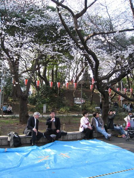 因為日本的賞花大會常由公司或部門舉辦