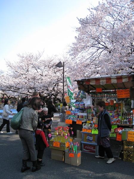 在櫻花季生意很不錯