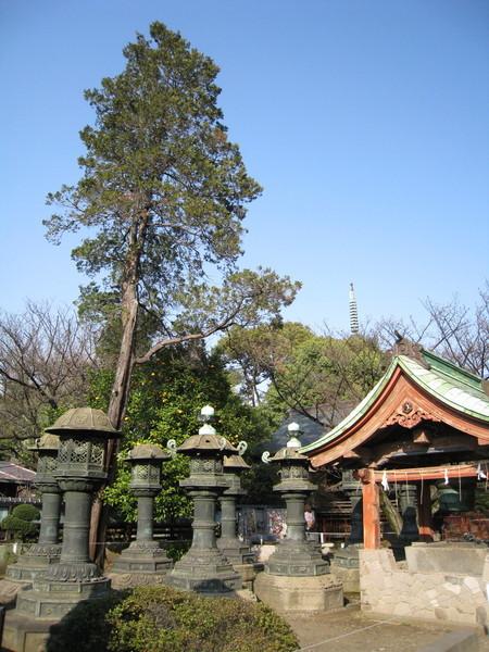 寺院內的涼亭和石燈籠