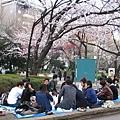 大學生打扮的一群小朋友,在公園內賞櫻野餐