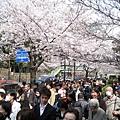 看氣象預報說週六天氣晴朗,吵著要大白帶我去千鳥之淵看櫻花