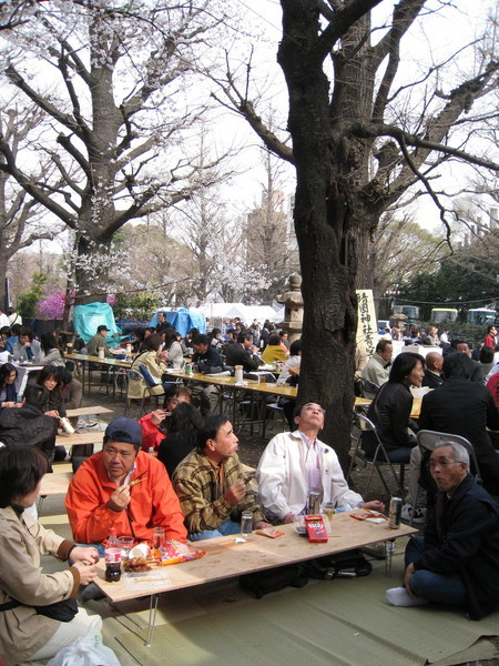 今年櫻花季,逛過上野公園、新宿御苑、靖國神社、千鳥之淵