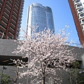左右兩棟是六本木Hills的高級公寓,中間是森大樓(Mori Tower)