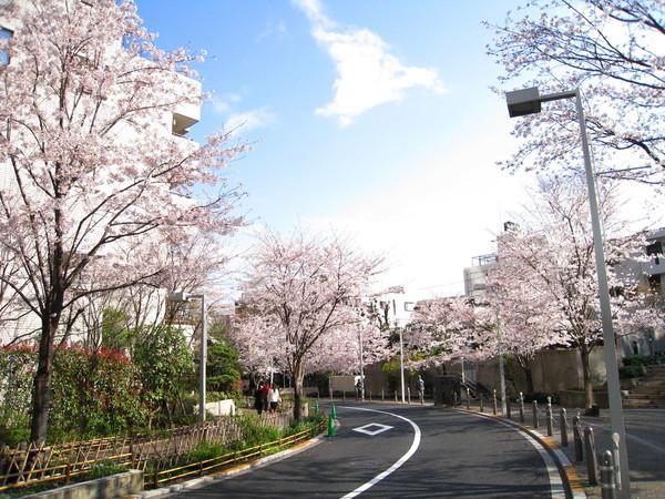櫻花坂其實非常短,慢慢散步,十分鐘內就走完了