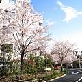 離開櫻花坂前回頭一瞥
