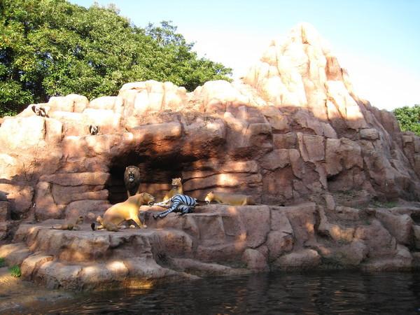 正在分食斑馬的獅子一家老小