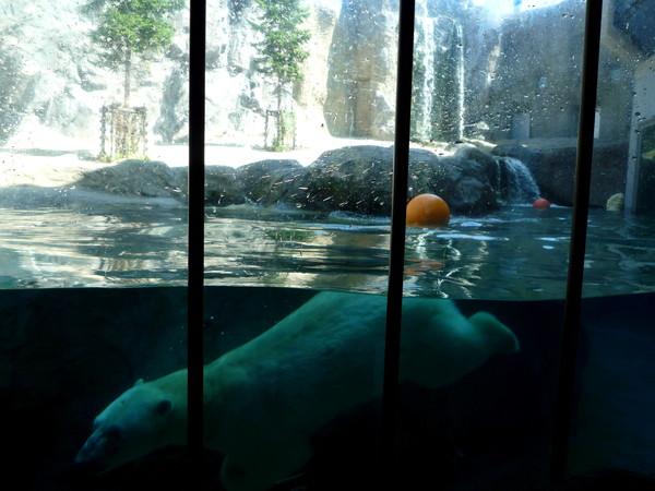 別看他這麼大塊頭,在水底可靈活的