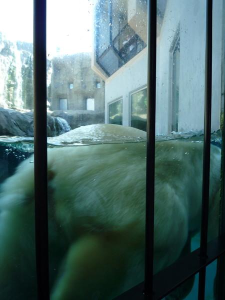 北極熊的大屁股