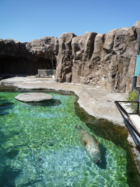 天氣晴朗,才照得出海豹在藍天碧海中游泳的美景