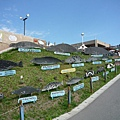 旭山動物園在小處非常用心,例如利用這塊山坡插立牌,展示不同品種海豹的大小