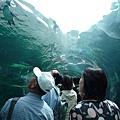 企鵝館的水底隧道,可以由透明的隧道觀賞企鵝游泳