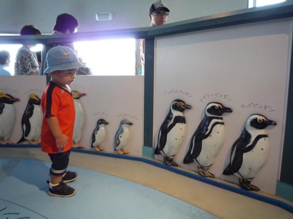 跟我一樣被企鵝牆迷住的只有這位小弟