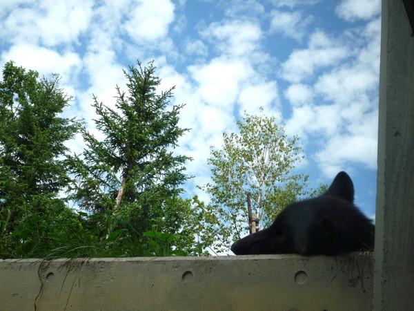 一隻野狼在窗口酣睡
