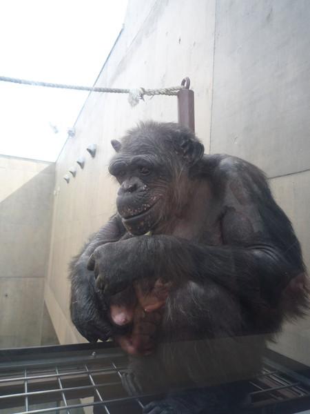 (設計對白)猩猩媽:沒關係,就算再臭,馬麻還是愛你