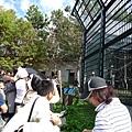 這一大群遊客,都是在引頸盼望園方最受歡迎的紅毛猩猩餵食秀