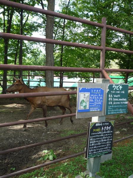 在猩猩餵食區旁,是被遊客冷落的馴鹿