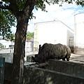 犀牛﹝本來想用「寡言」來形容他,但想想動物園裡好像也沒有誰會說話﹞
