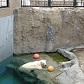 這隻很懶散的泡在水裡,也懶得玩眼前的球