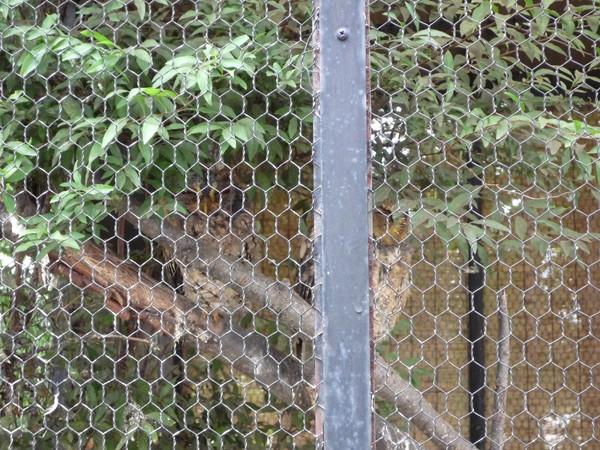 因為是大白天,貓頭鷹都在陰暗的籠裡睡覺
