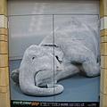 這張垂死的大象,也是印度美術展的海報