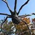 大蜘蛛與紅葉