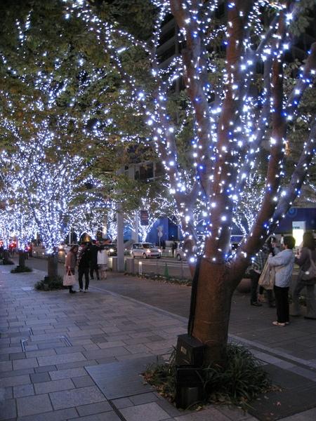 櫸木坂大道上的火樹銀花