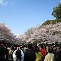 上野公園每年櫻花季遊客都多到爆炸,如果討厭人擠人,逛起來恐怕不會太舒服
