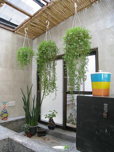 點綴廚房的綠色植物