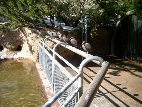 Bronx Zoo,這不知道是什麼鳥?