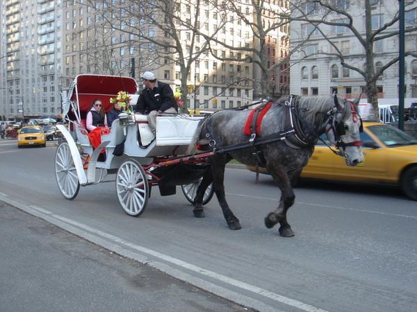 中央公園裡的觀光馬車,我從來沒坐過