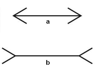 01=Muller Lyer.jpg