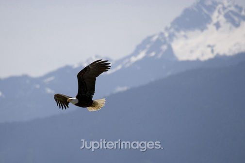 Eagle01-L.jpg